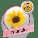 ทานตะวัน 10 ดอก