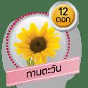 ทานตะวัน 12 ดอก