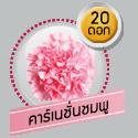 คาร์เนชั่นชมพู 20 ดอก