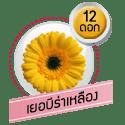 เยอบีร่า 12 ดอก