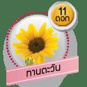 ทานตะวัน 11 ดอก