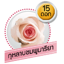 กุหลาบชมพูมารียา 15 ดอก