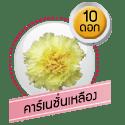 คาร์เนชั่นเหลือง 10 ดอก