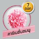 คาร์เนชั่นชมพู 7 ดอก