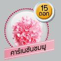 คาร์เนชั่นชมพู 15 ดอก