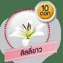 ลิลลี่ขาว 10 ดอก