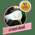 คาลล่าลิลลี่ 10 ดอก