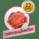 กุหลาบชมพูโอลด์โรส 23 ดอก