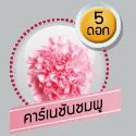 คาร์เนชั่นชมพู 5 ดอก