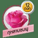 กุหลาบชมพู 12 ดอก