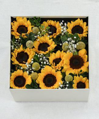 กล่องดอกทานตะวันสีเหลืองสดใส