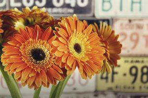 ดอกเยอบีร่าสีสันสดใส ช่วยเพิ่มความสว่างให้ห้อง