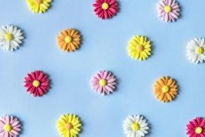 ดอกเยอบีร่าสีขาว สีเหลือง สีแดง และสีชมพูบนพื้นสีฟ้า