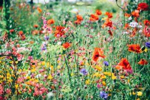 ทุ่งดอกไม้ในป่าที่มีดอกไม้หลายชนิดเติบโตอยู่
