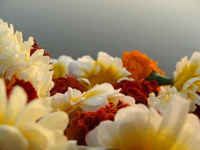 ดอกไม้สีขาว และสีส้ม