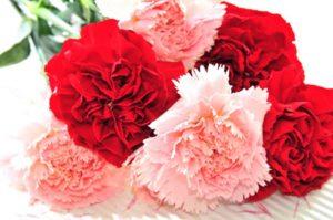 ราศีมีน-ดอกคาร์เนชั่นแดง