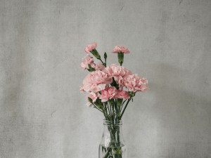 ดอกคาร์เนชันสีชมพูอ่อนจัดอยู่ในแจกันใบใส
