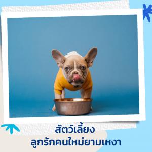 สุนัข ไอเดียของขวัญวันแม่ปี 2021