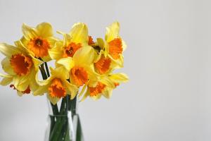 ดอกดารารัตน์ หรือดอกแดฟโฟดิลจัดในแจกัน