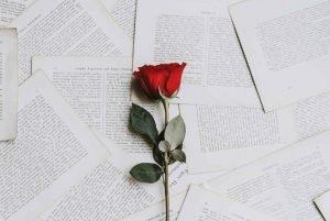 ดอกกุหลาบดอกเดี่ยวบนหน้าหนังสือ